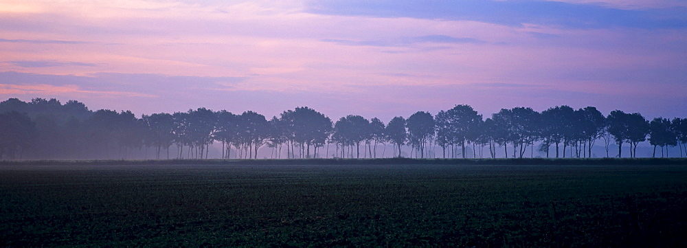 Row of trees at dawn, Dingdener Heide, Dingden Heath, North Rhine-Westphalia, Germany