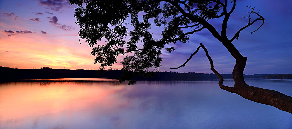 Sunset, tree on lake Pilsensee, Bavaria, Germany, Europe