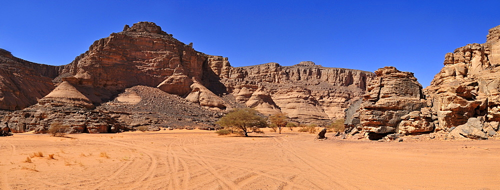 Wadi, Oued In Djerane with Acacia tree, Tadrart, Tassili n'Ajjer National Park, Unesco World Heritage Site, Algeria, Sahara, North Africa