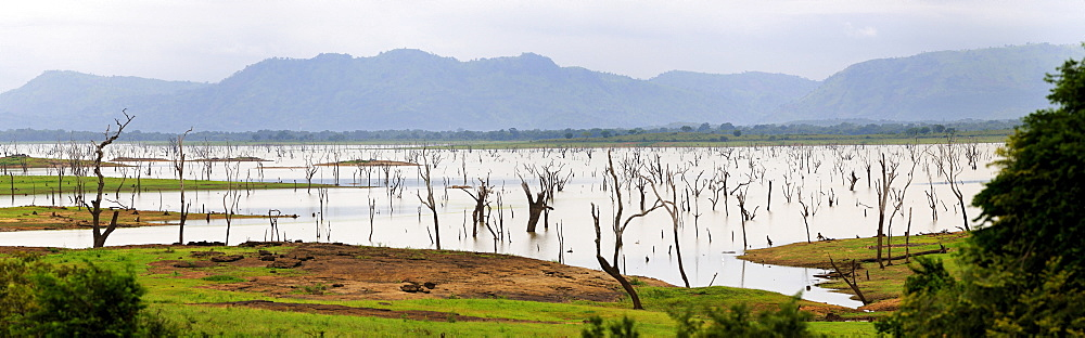 Inland lake with dead trees, Arugam Bay, Sri Lanka, South Asia