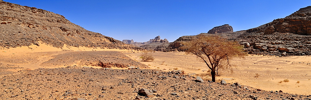 Large Wadi, Oued with acacia tree, Tadrart, Tassili n'Ajjer National Park, Unesco World Heritage Site, Algeria, Sahara, North Africa