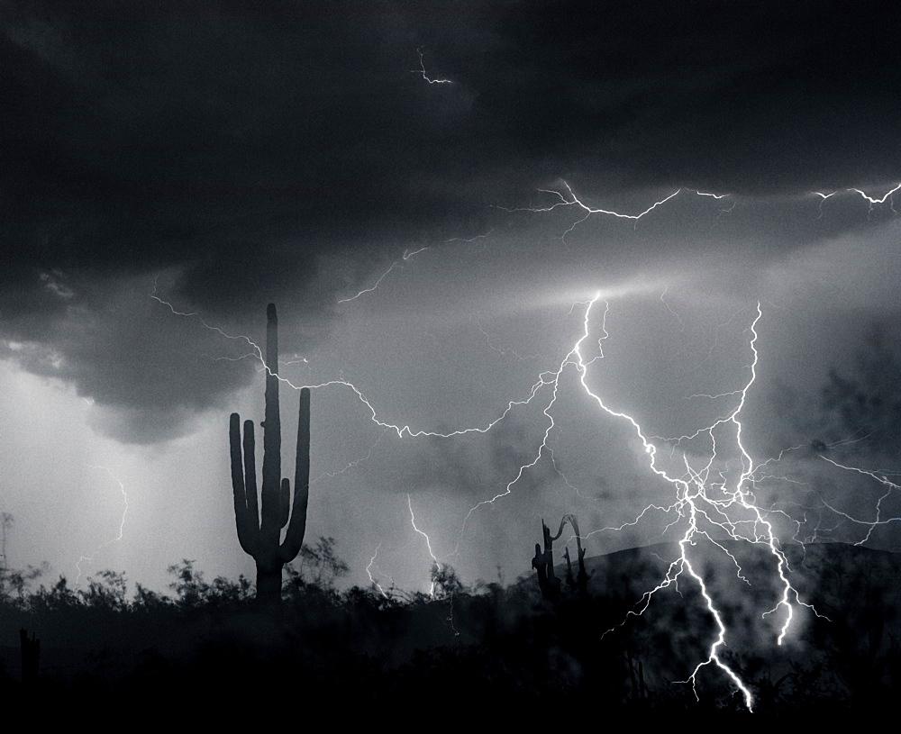 Living In Fear, Lightning; Sahuaro Cactus; Arizona - 1065-43