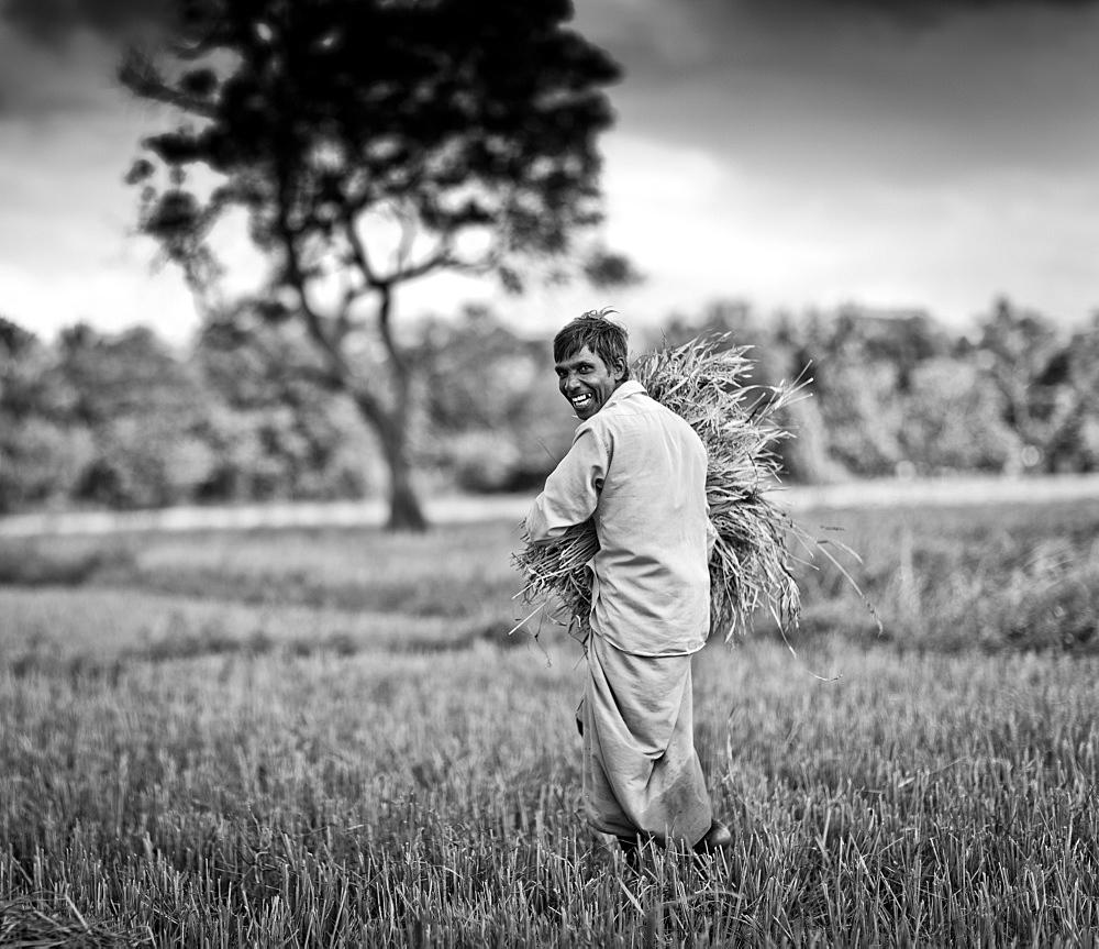Wheat farmer, Sri Lanka, Asia