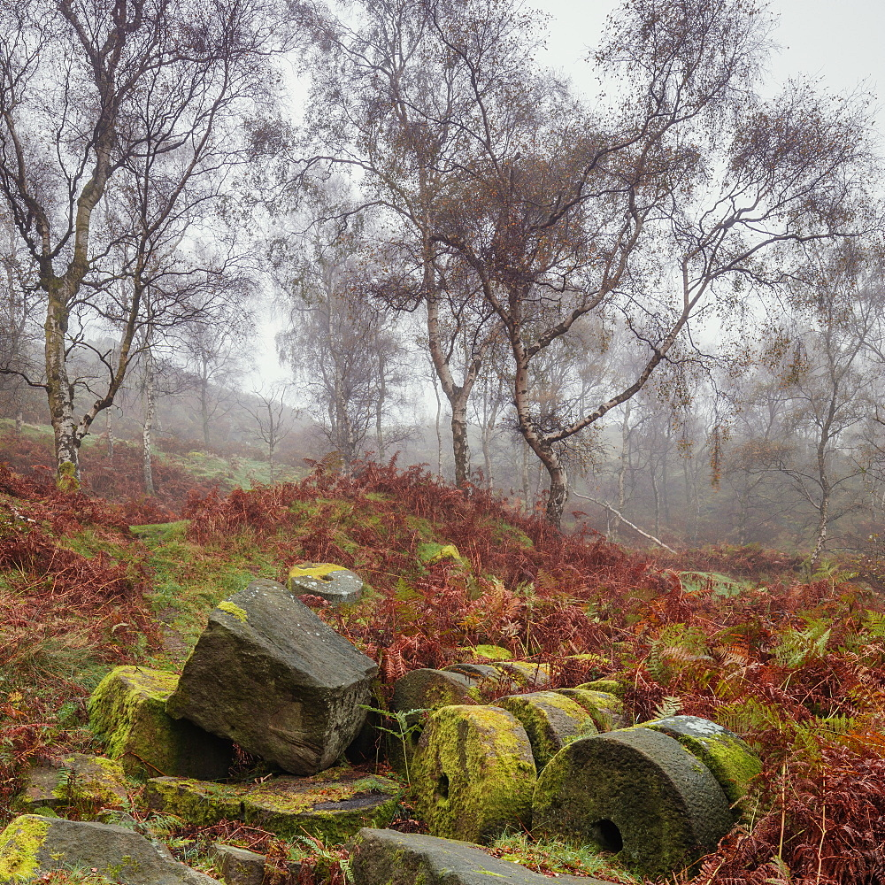 Millstones covered in moss lie derelict within the former Bole hill quarry on a misty autumn morning in the Peak District, Derbyshire, England, United Kingdom, Europe