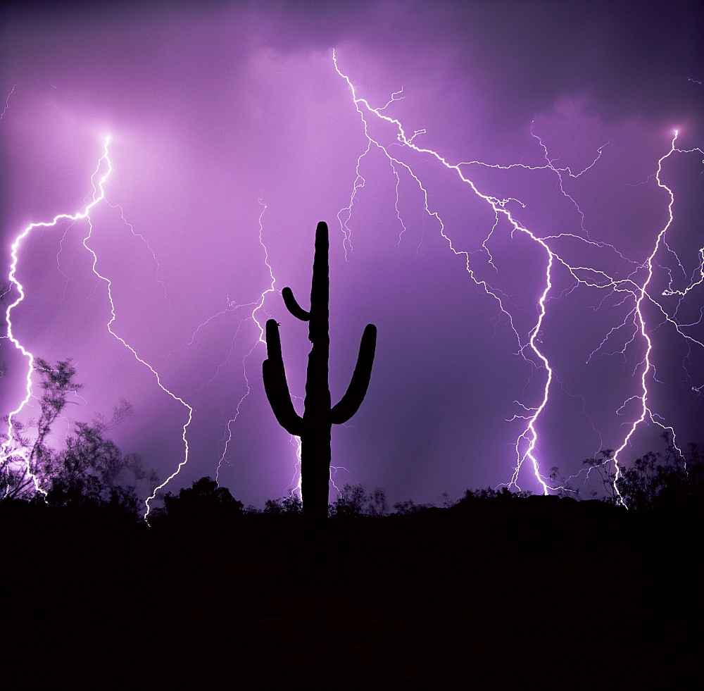 Cactus silhouetted against lightning, Tucson, Arizona, United States of America (U.S.A.), North America - 136-2179