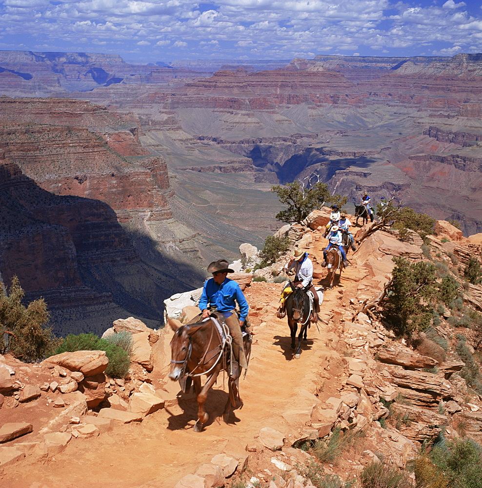 Returning on horseback, Grand Canyon, UNESCO World Heritage Site, Arizona, United States of America, North America - 136-884