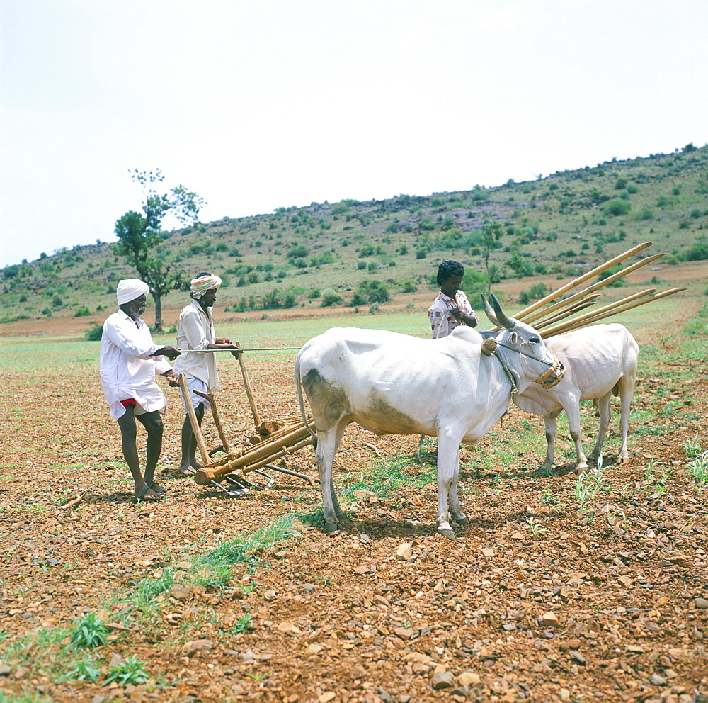 Farmers and buffalo, Karnataka, India, Asia