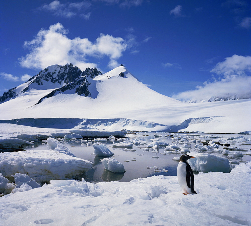 Single gentoo penguin on ice in a snowy landscape with a mountain in the background, on the Antarctic Peninsula, Antarctica, Polar Regions