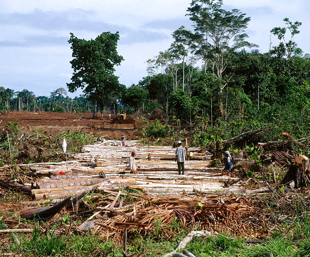 Building a road in the forest, Amazon, Deforestation, Ecuador. - 817-20467