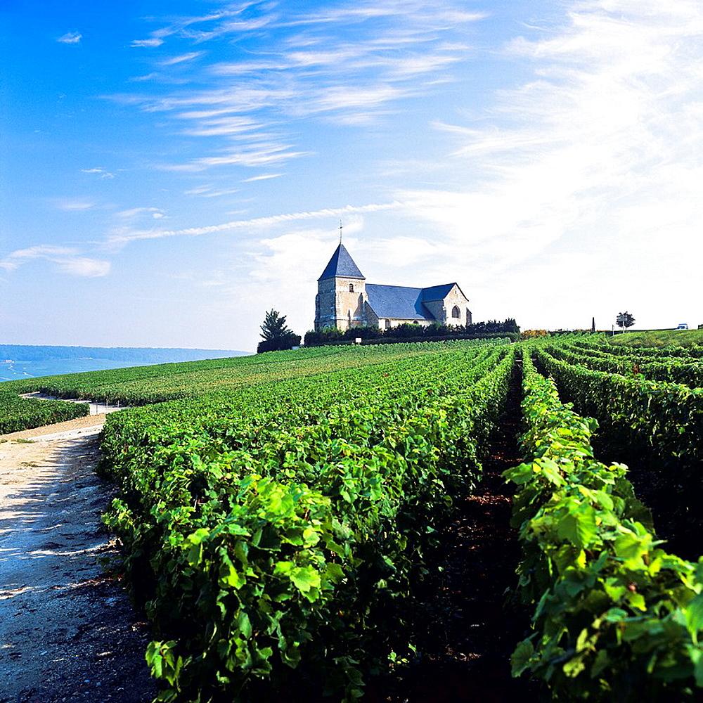 Vineyards with St-Martin de Montfelix church, 12th century, Chavot, Champagne, France