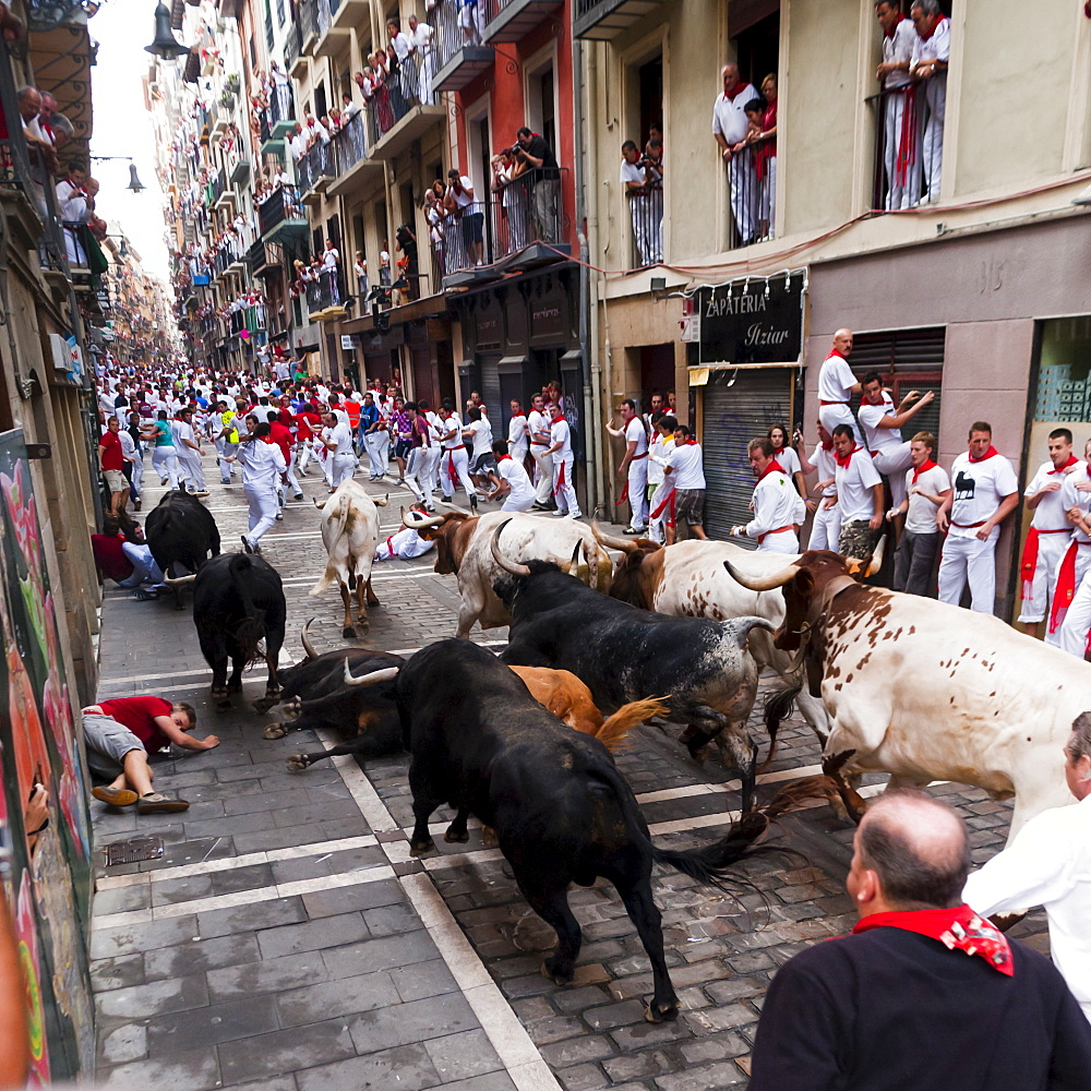 Eighth and last Encierro (running of the bulls), San Fermin festival, Pamplona, Navarra (Navarre), Spain, Europe - 827-331