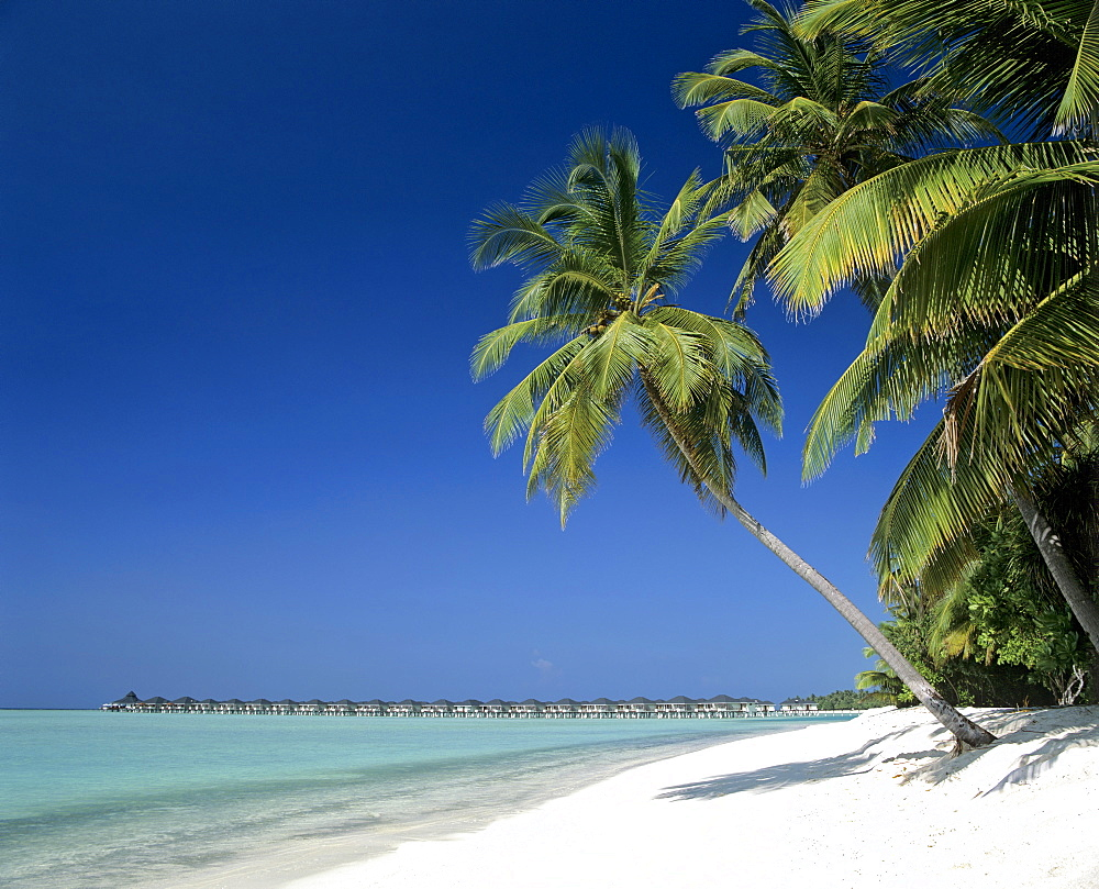 Water bungalows, palms, and beach, Sun Island, Ari Atoll, Maldives, Indian Ocean