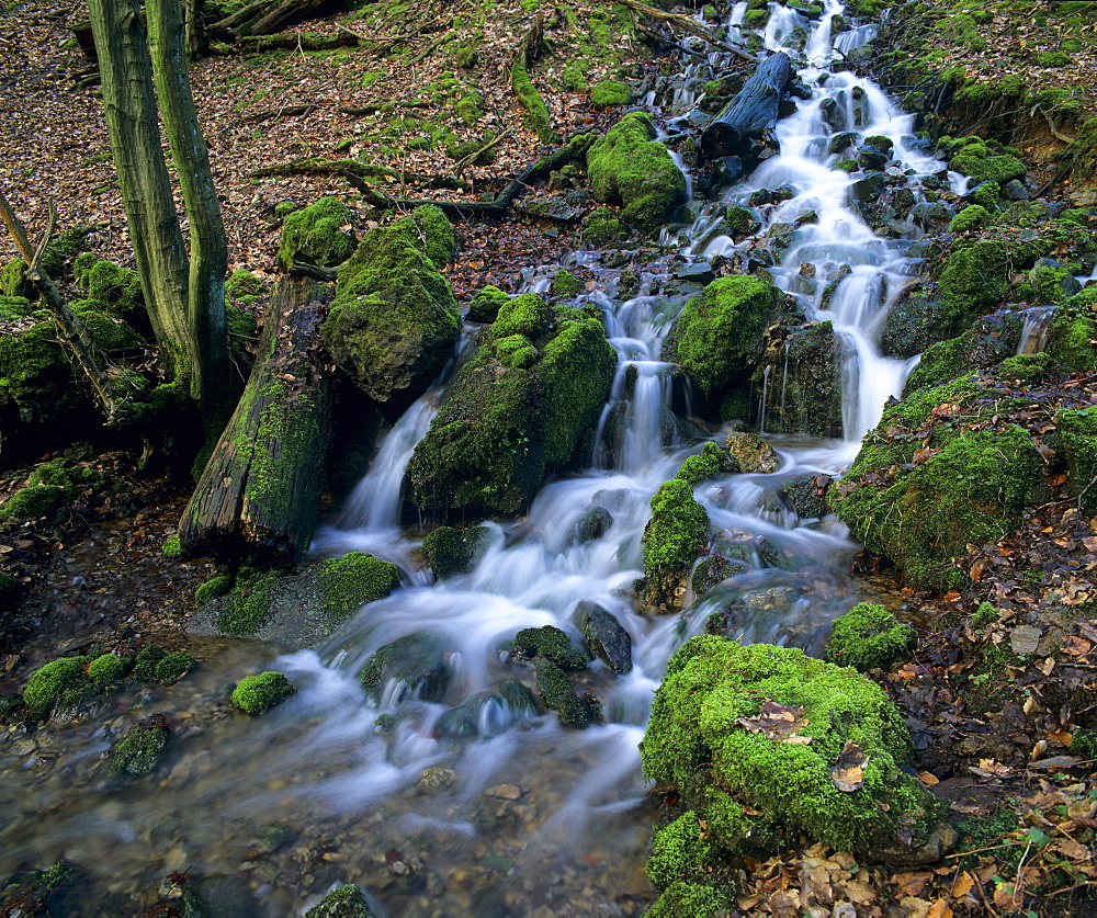Moss-covered rocks in a forest stream, North Rhine-Westphalia, Germany, Europe