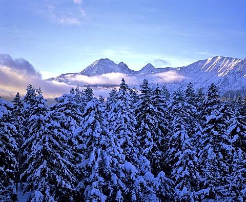 Rosskogel in the Stubai Alps, winter, forest, Tyrol, Austria