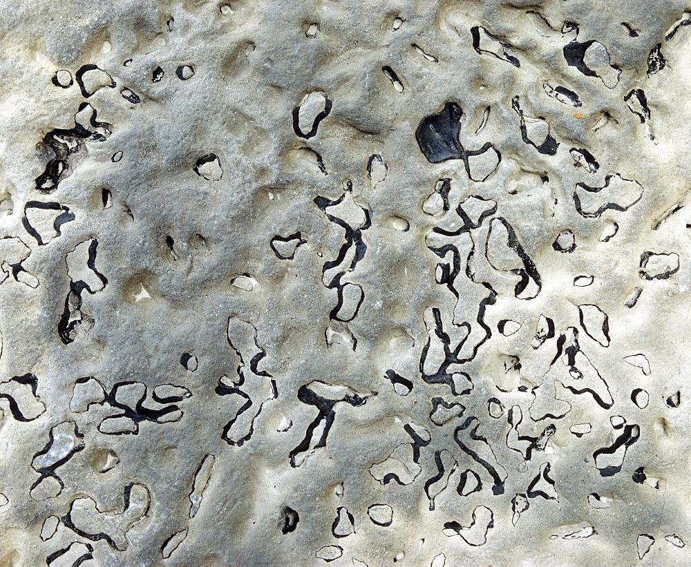 Black algae in rock