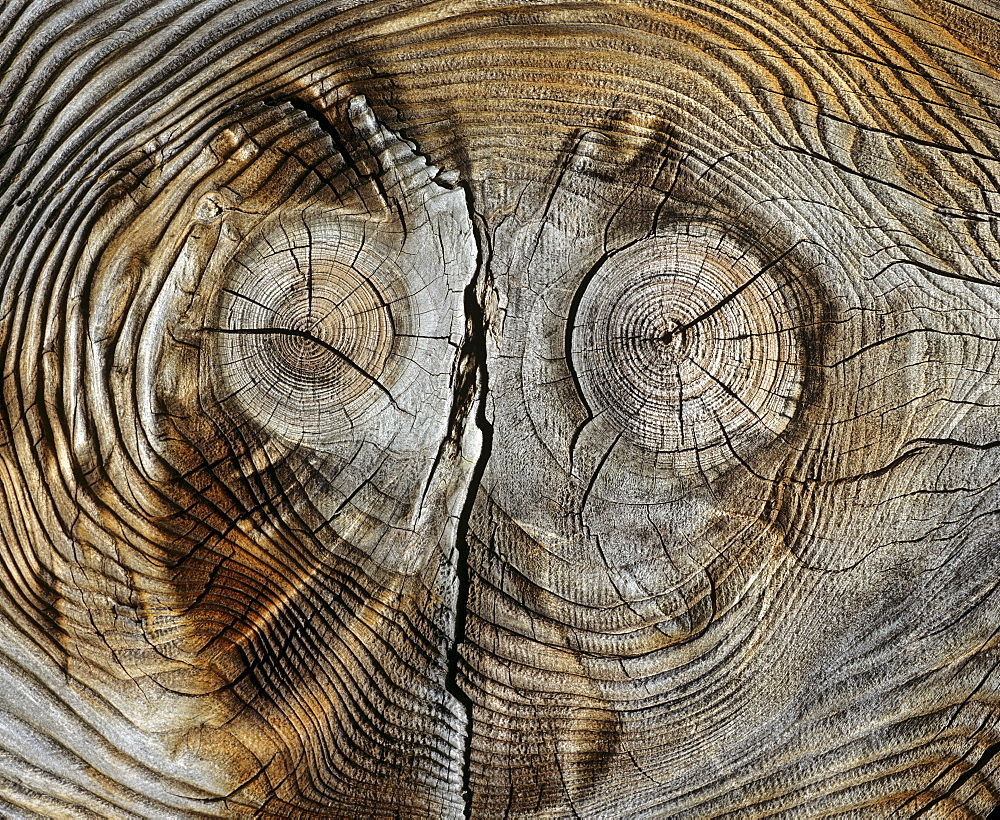 Trunk with patterning like a face and knotholes like eyes
