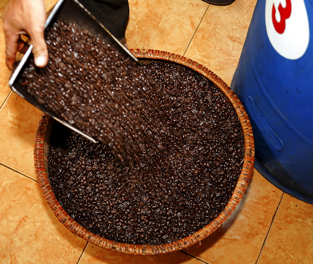 Robusta coffee in the coffee storage of Simexco Daklak in Buon Ma Thuot City, Vietnam, Southeast Asia