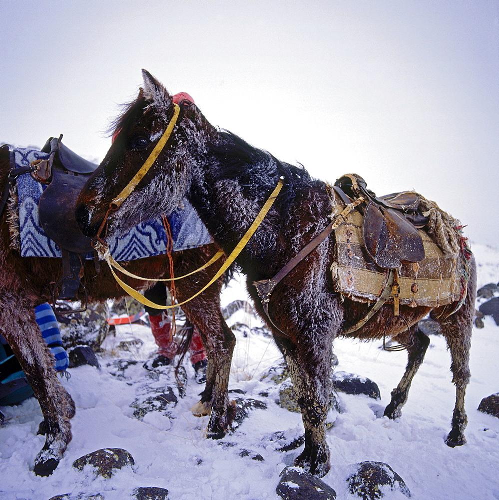 Load-animal, Anatolia, Turkey