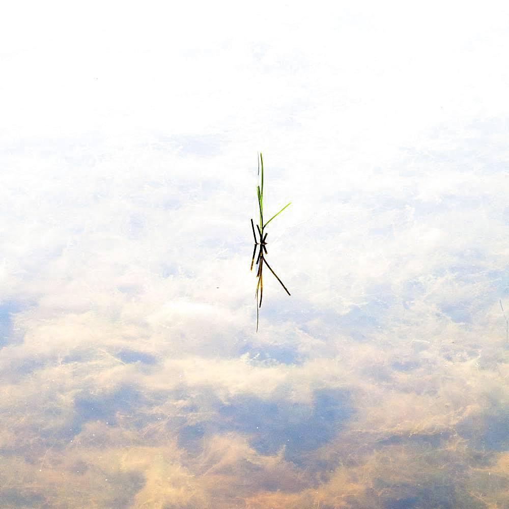 Vigueirat marsh, Arles, Camargue Regional Nature Park, France
