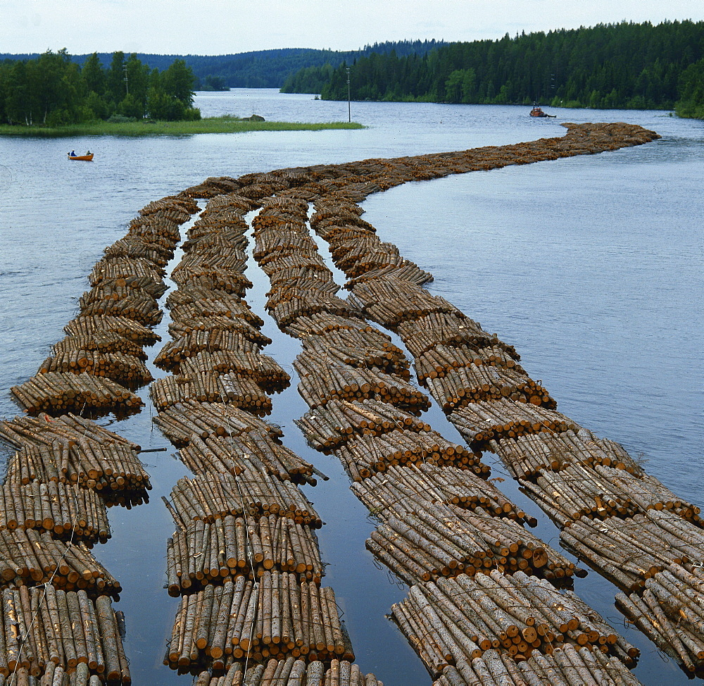 forestry trees transport of logs on river