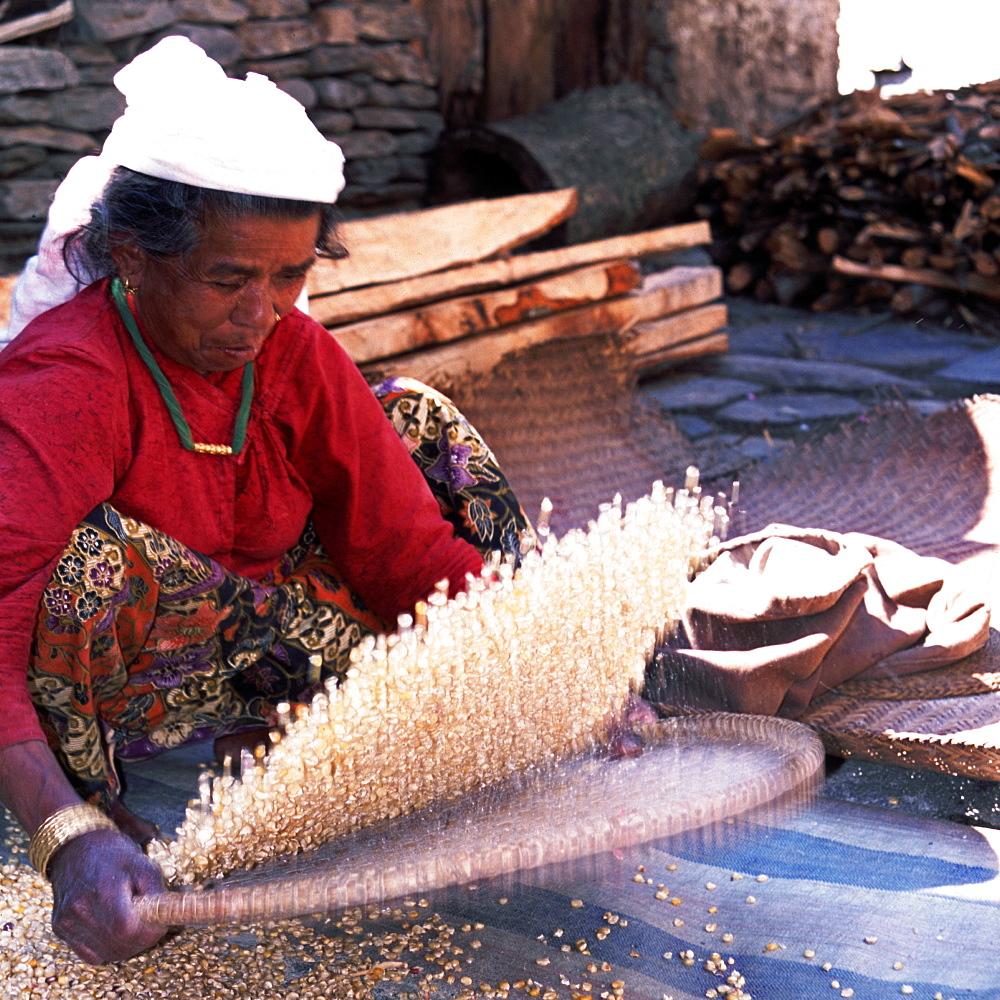 Woman Willowing Maize. Annapurna Trail near Pokhara. - 986-55