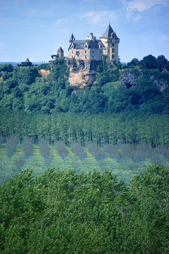 Walnut trees in foreground, Montfort, Dordogne, France, Europe