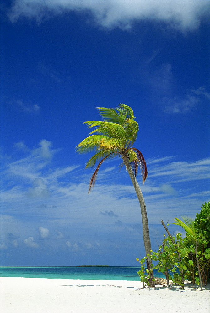 Palm tree on beach on the island of Nakatchafushi in the Maldive Islands, Indian Ocean, Asia