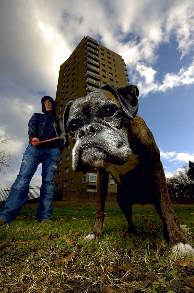 A hooded youth holds his Boxer dog on a lead outside a housing estate in Brixton, London - 1005-168