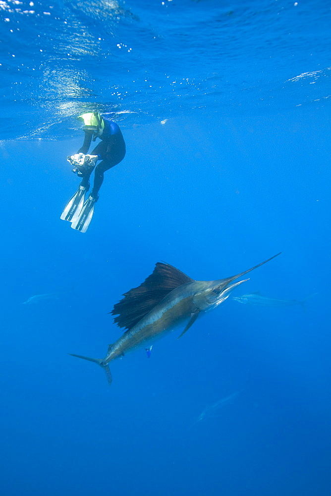 Sailfish & snorkeler. Mexico - 1012-84