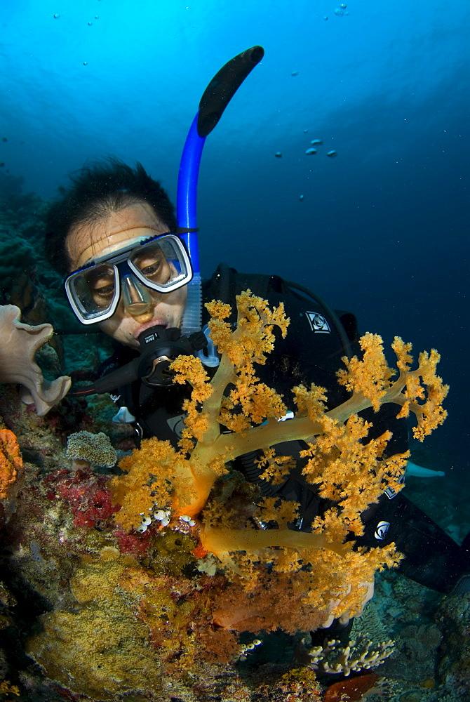 Soft Coral & diver. Siamil Island, Malaysia