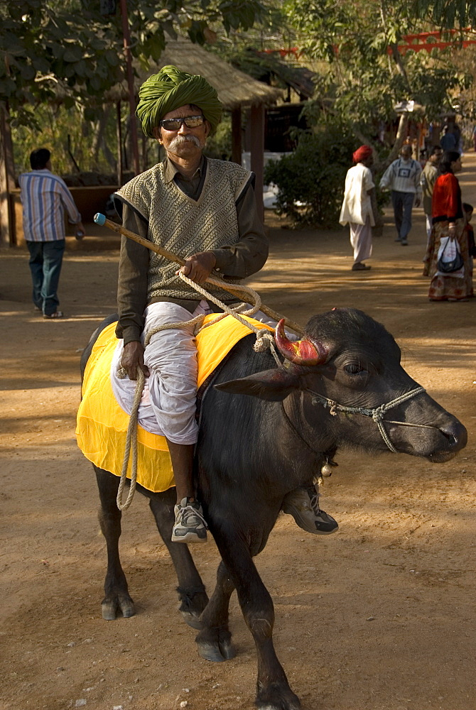 Elderly man with turban and sunglasses riding a buffalo, Udaipur, Rajasthan