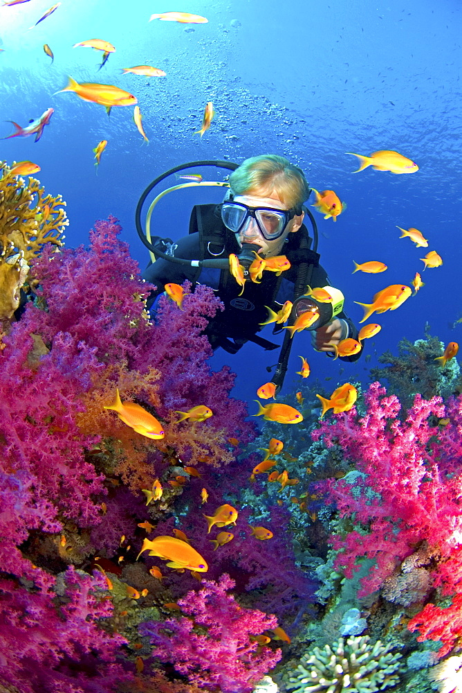 diver in coral reef. Egypt, Red Sea - 1072-48