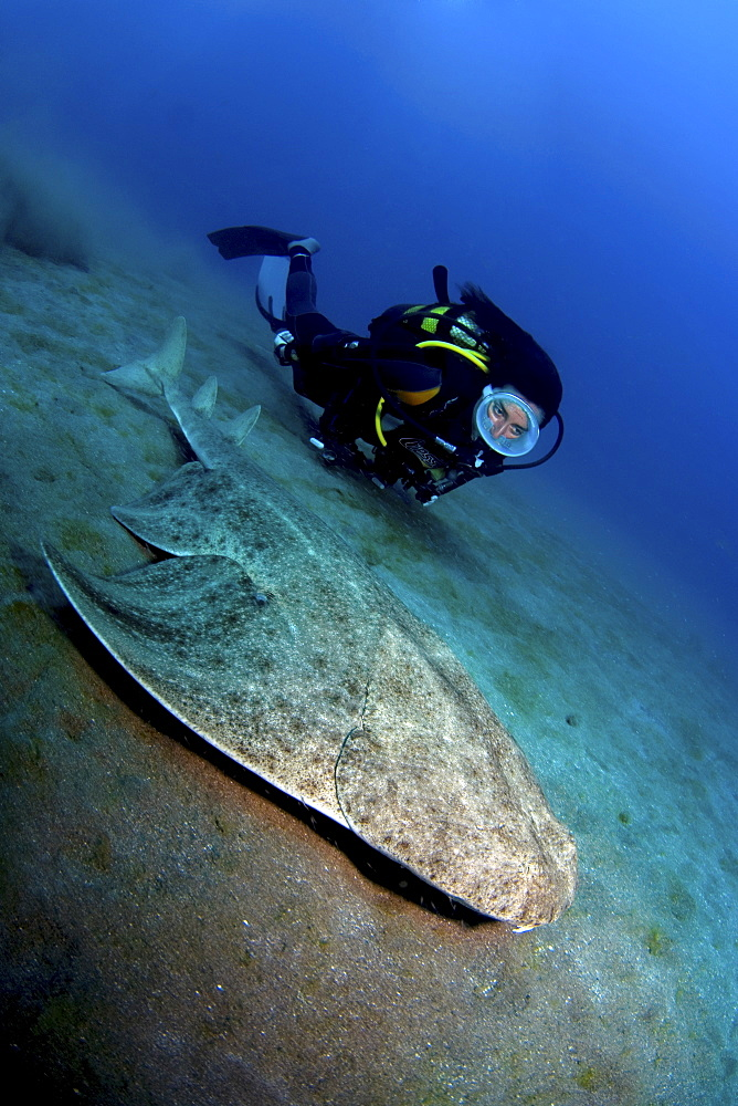 angel shark and female diver, Gran Canaria, Canary Islands - 1072-50
