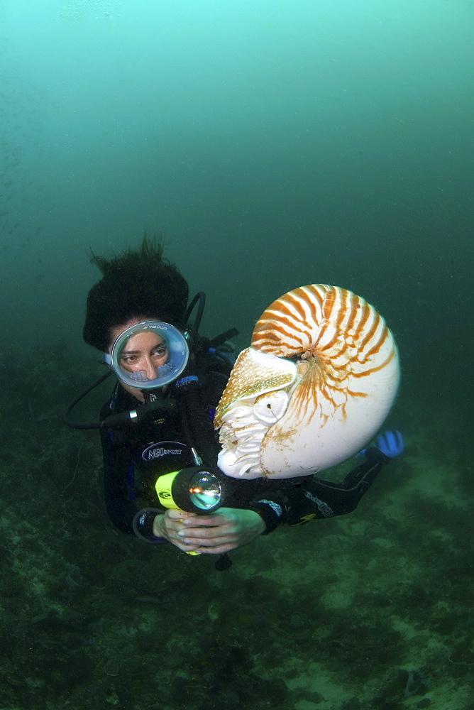Nautilus and female diver, Komodo, Indonesia