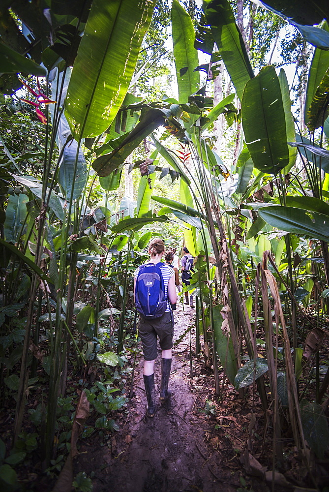 Amazon Jungle trek on Monkey Island (Isla de los Monos), Tambopata National Reserve, Peru, South America