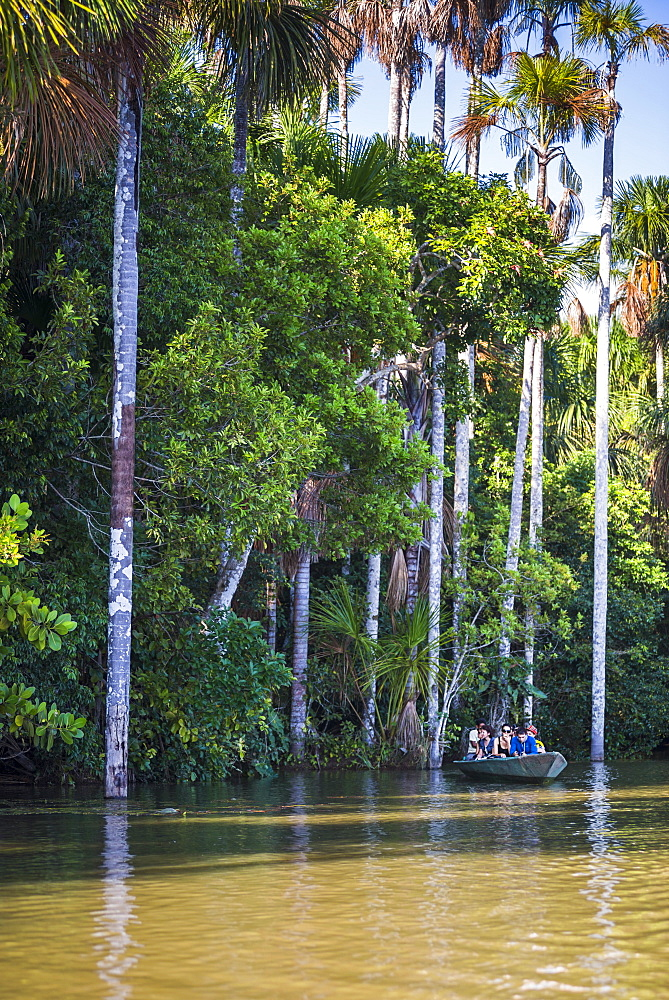 Canoe boat trip on Sandoval Lake, Tambopata National Reserve, Amazon Jungle of Peru, Peru, South America