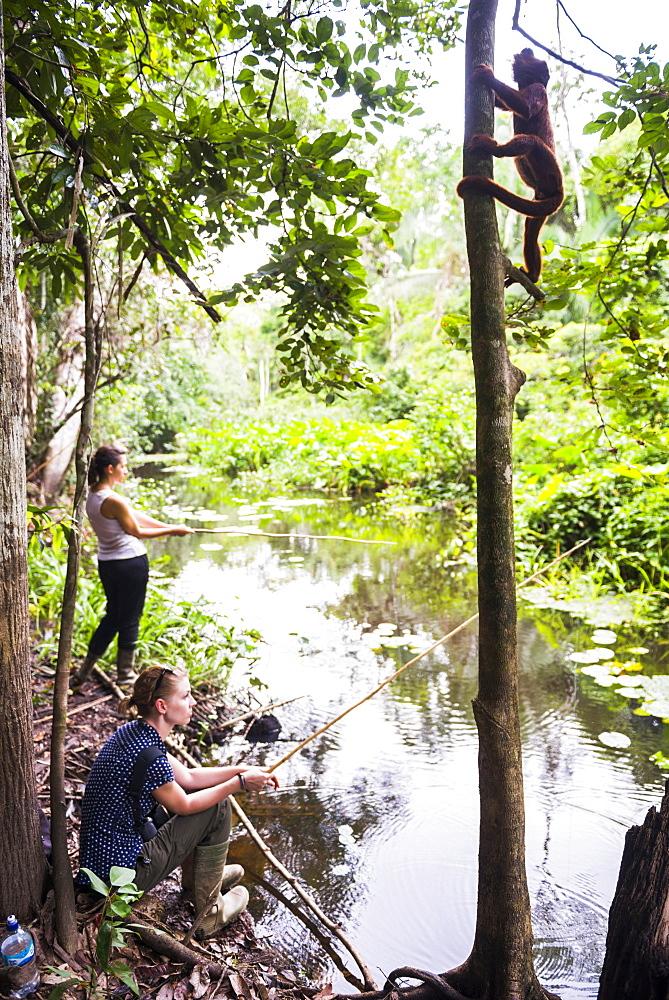 Red howler monkey, tourists piranha fishing, Tambopata National Reserve, Puerto Maldonado Amazon Jungle area of Peru, South America