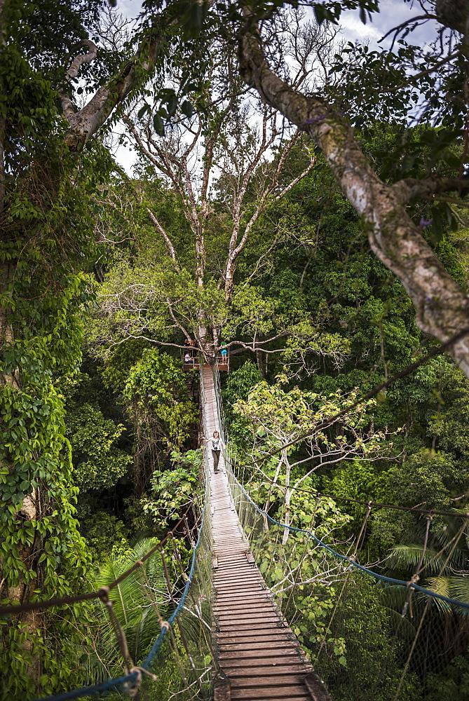 Amazon Jungle swinging rope bridge in Puerto Maldonado area, Peru, South America