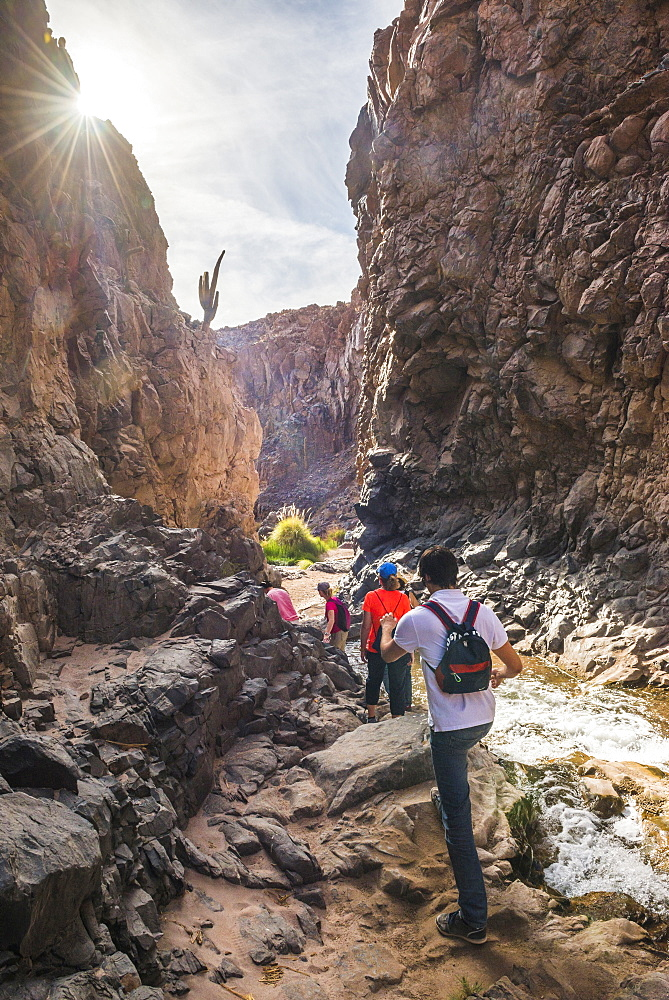 Trekking in Cactus Valley (Los Cardones Ravine), Atacama Desert, North Chile, Chile, South America