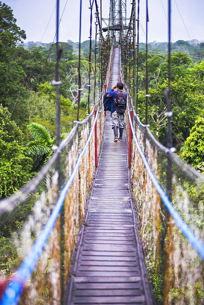 Jungle Canopy Walk in Amazon Rainforest at Sacha Lodge, Coca, Ecuador, South America