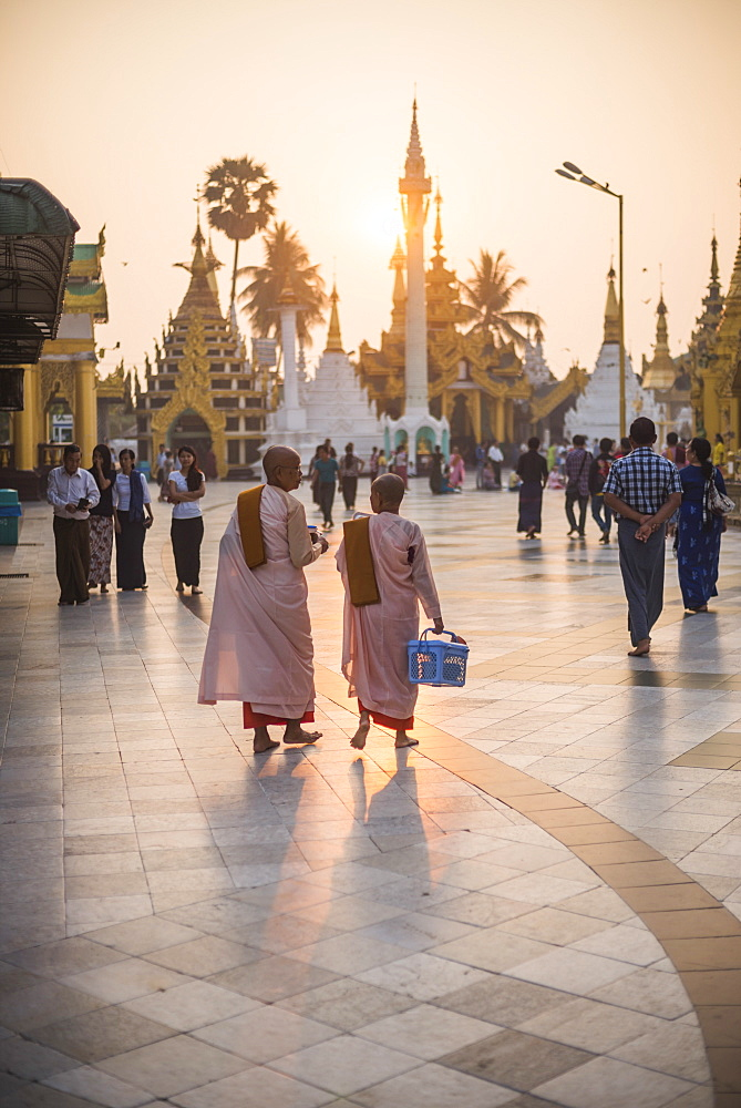 Buddhist nuns in pink robes at sunrise at Shwedagon Pagoda (Golden Pagoda), Yangon (Rangoon), Myanmar (Burma), Asia