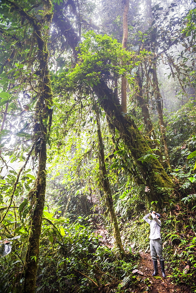 Bird watching in the Choco Rainforest, and area of Cloud Forest in the Pichincha Province, Ecuador, South America