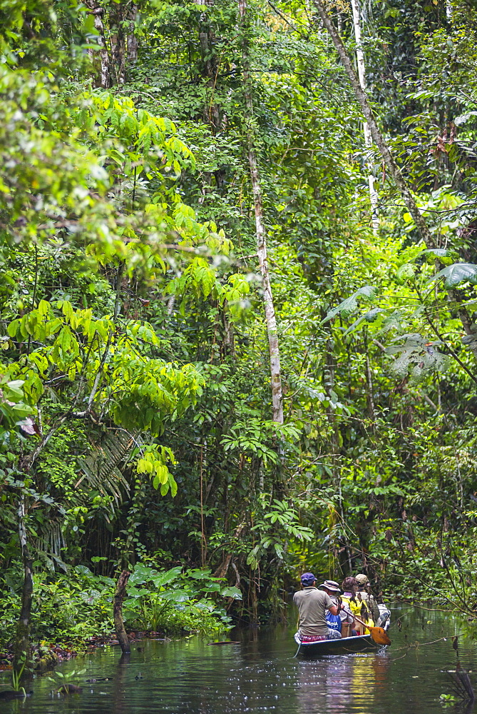 Dugout canoe boat ride in the Amazon Rainforest, Coca, Ecuador, South America