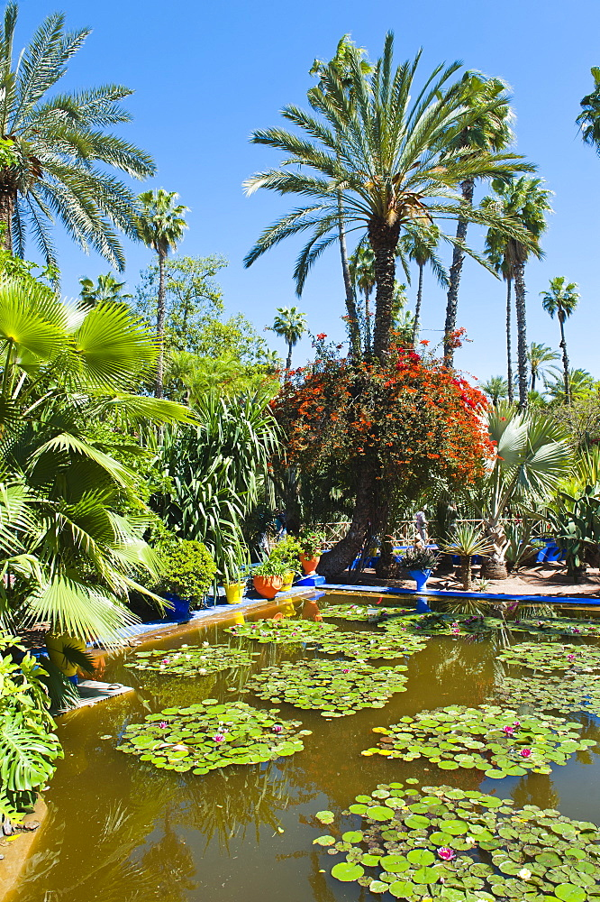 Pond and palm tree, Majorelle Gardens (Gardens of Yves Saint-Laurent), Marrakech, Morocco, North Africa, Africa