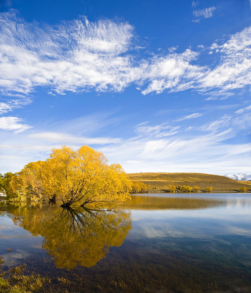 Golden autumn tree reflection in still morning water, Lake Alexandrina, Southern Lakes, Otago Region, South Island, New Zealand, Pacific