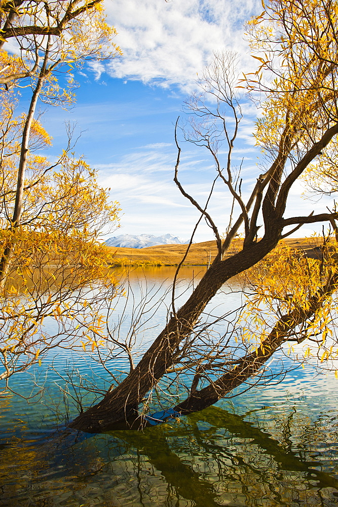 Snow capped mountains and autumn trees, Lake Alexandrina, Canterbury Region, South Island, New Zealand, Pacific