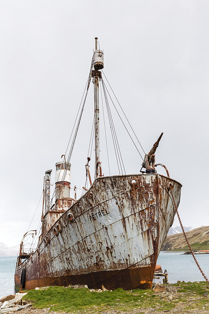 The whale catcher ship Petrel on display at the abandoned and recently restored whaling station at Grytviken, South Georgia, UK Overseas Protectorate