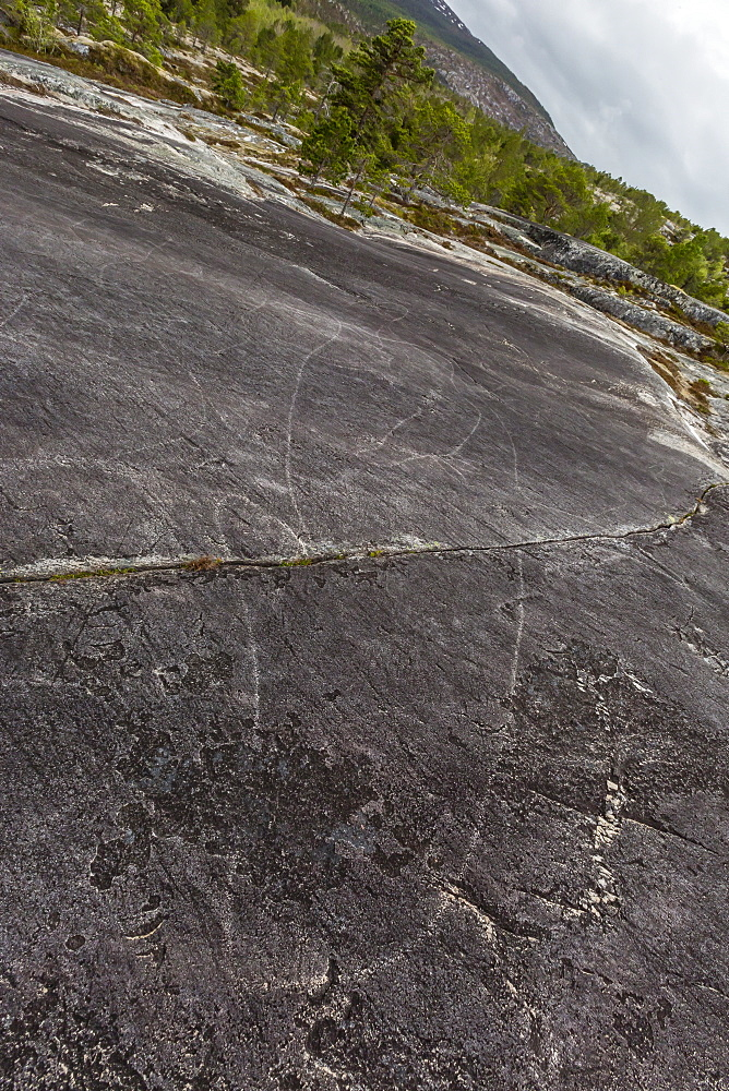 Leiknes Rock Paintings depicting a killer whale, drawn by the ancestors of the Saami perhaps 9000 years ago, Leiknes, Troms, Norway, Scandinavia, Europe