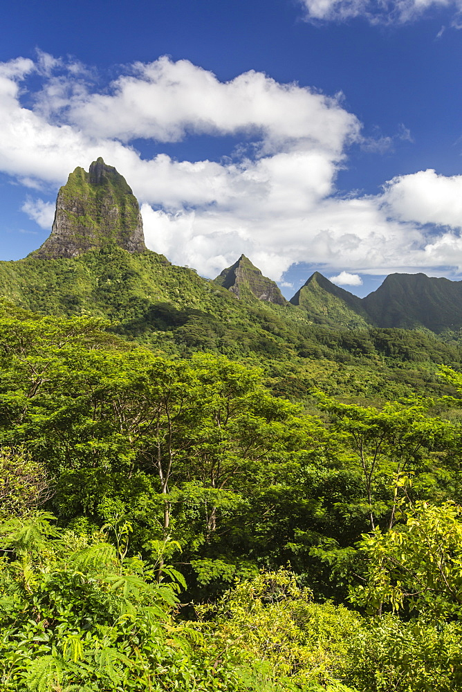 View of the rugged mountains surrounding Opunohu Valley from the Belvedere Overlook, Moorea, French Polynesia. - 1112-3964