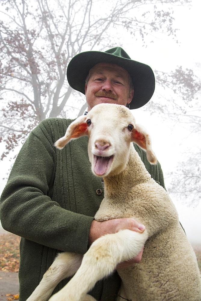 Shepherd Alfred Eichhorn of Eichhorn sheep farm holding a lamb, Schernfeld, near Eichstaett, Altmuehltal, Franconia, Bavaria, Germany